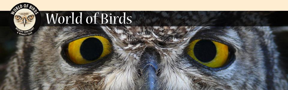 World of Birds (Western Cape)