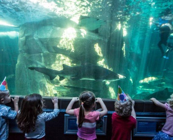 Two Oceans Aquarium (Western Cape)