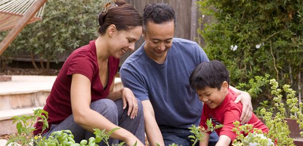 Growing your own Veggie Garden