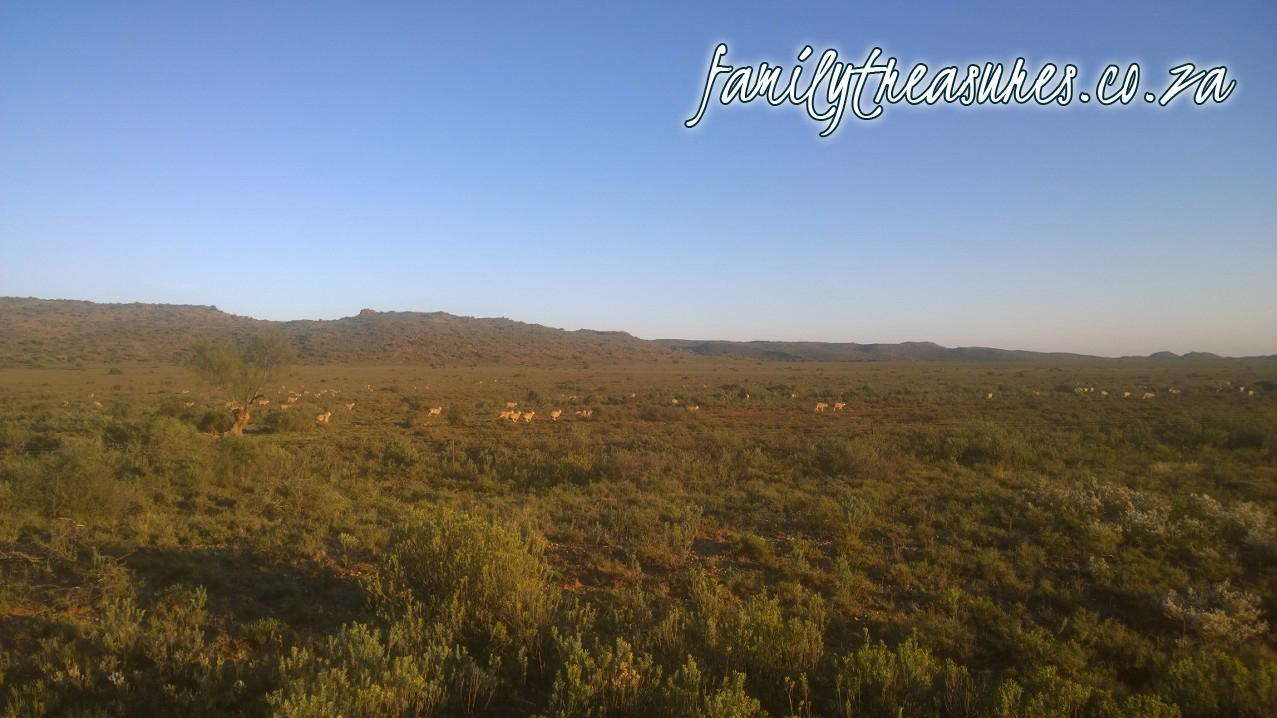 Joburg-trek-sheep copy